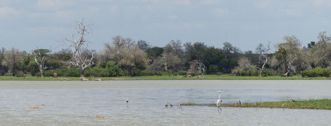 Eindrücke einer Bootssafari auf den Rufiji River