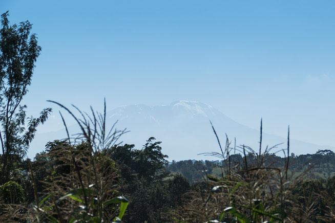 """Blick auf den Schnee bedeckten Kibo von der Lodge """"House of West Kili"""""""