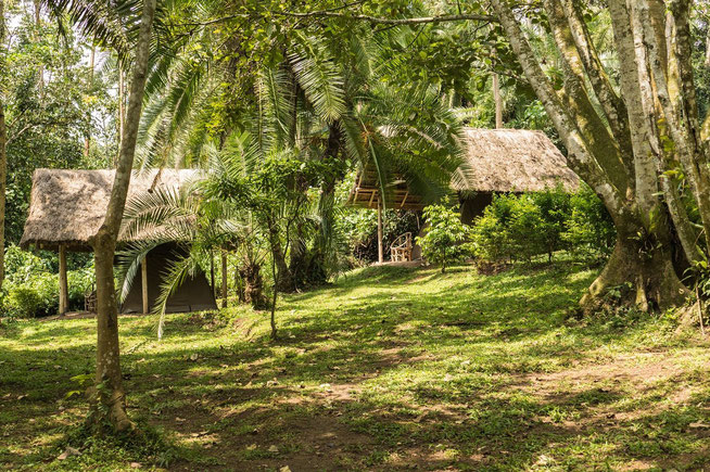 Kibale Forest Camp - Lazy camping und Campsite