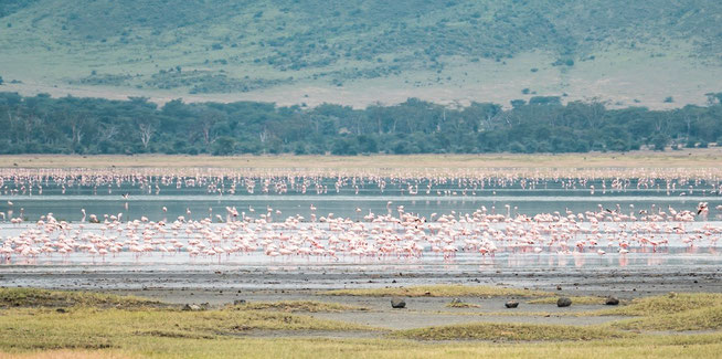 Flamingos am Lake Magadi