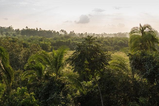 Blick über die Magombe Swamps