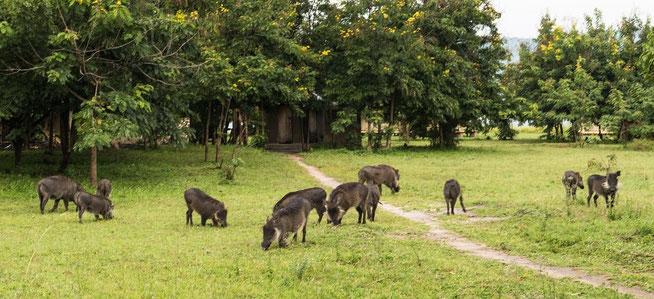 Tierischer Besuch auf der Campsite