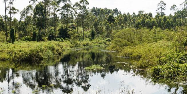 Muzizi River - Grenzfluss zwischen den Kingdoms Bunyoro und Toro