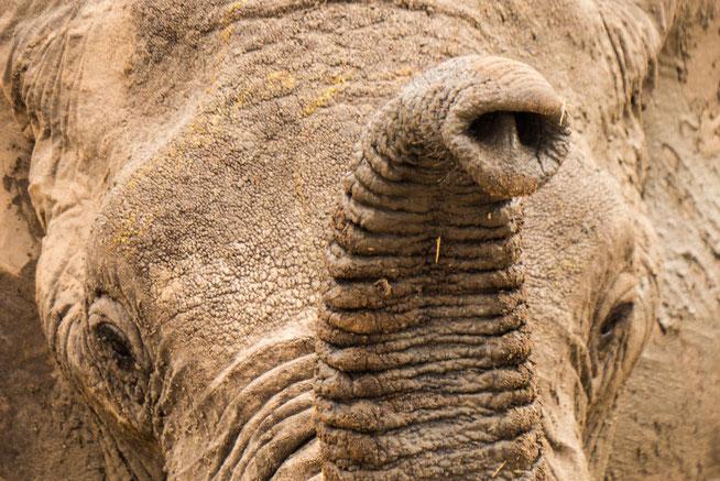 Elephant Close-up - Ruaha National Park 2013