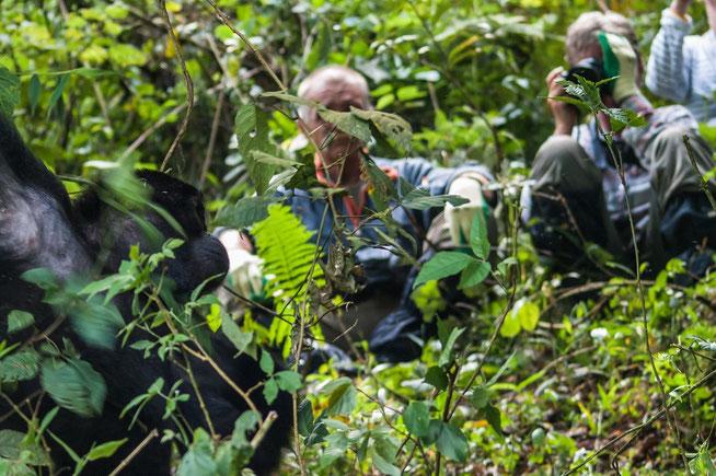 Erinnerung an einen atemberaubenden Tag - wir bei den Berggorillas im Bwindi - Photo taken by Alun Carew