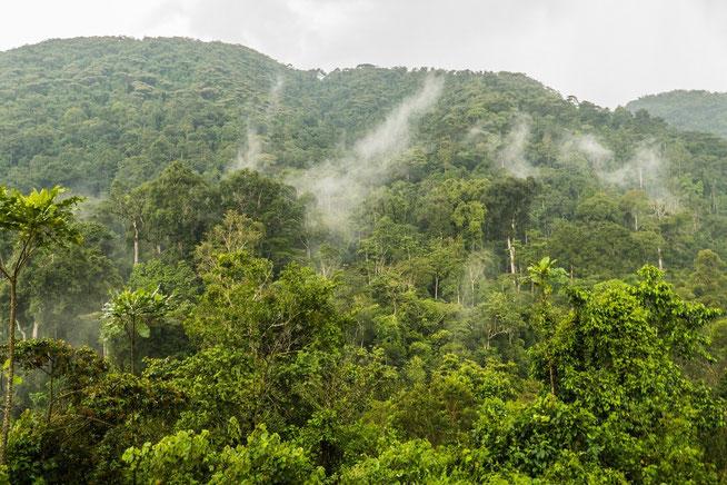 Blick von der Terrasse der Engagi Lodge in den Bwindi Regenwald nach einem Regenguss