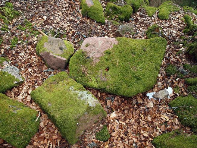 Steine der ehem. Burg