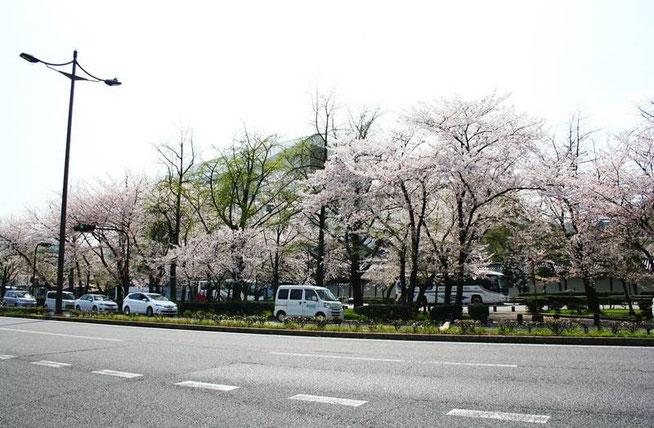 La large rue Karasuma (Karasuma Dōri) qui mène à notre auberge et en arrière plan le temple sous sa bâche