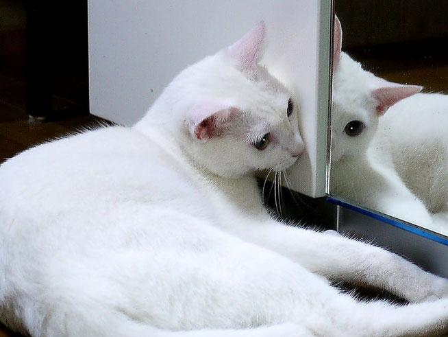 私って色白で美人よね!