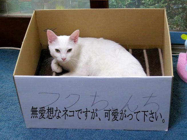 ネコは捨ててはいけません。どうしても飼えなくなったときはネコの保護団体等に相談しましょう。この写真はあくまでジョークです。