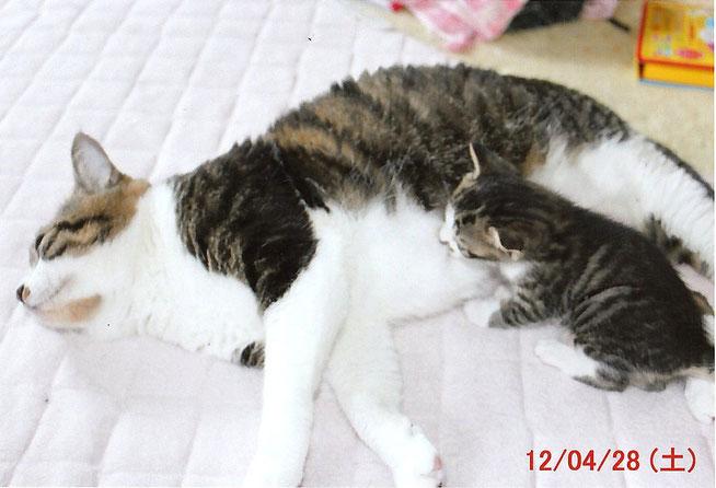 ハルちゃんママとアキちゃん