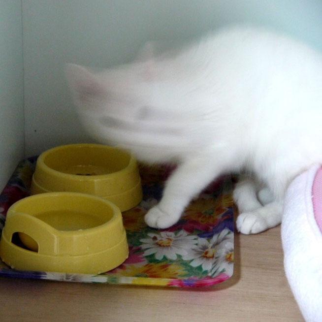 ガツガツ食べて、「貞子」状態のフクちゃん!