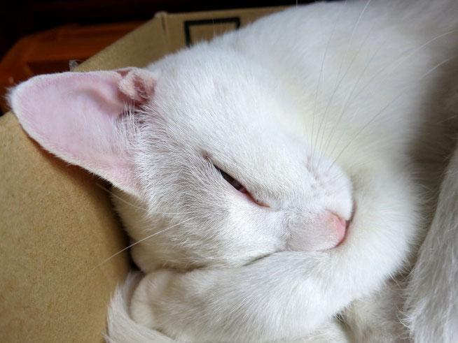 ネコは寝るに限るニャー!