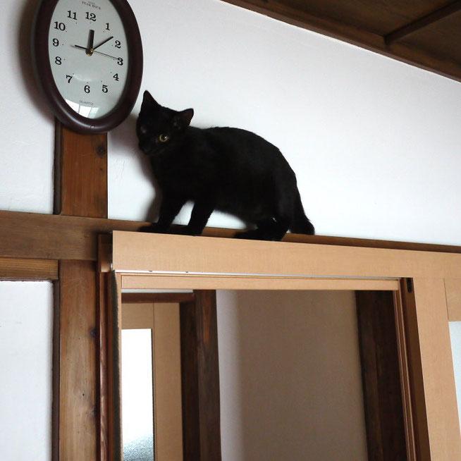 エリザベス・カラーがなければ、こんなところにも登れるニャン!だけど、どうやって降りるかまでは考えていないのだニャン!