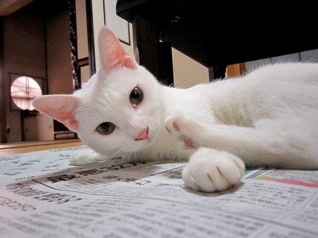 新聞なんか読んではらんと、うちのことかもて欲しいニャー!
