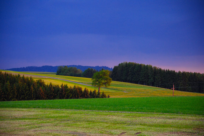 The farmroad from Schachen to Haberpoint in Upper austria