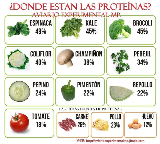 La alimentaci n p gina web de aviarioexperimentalmp - Q alimentos son proteinas ...