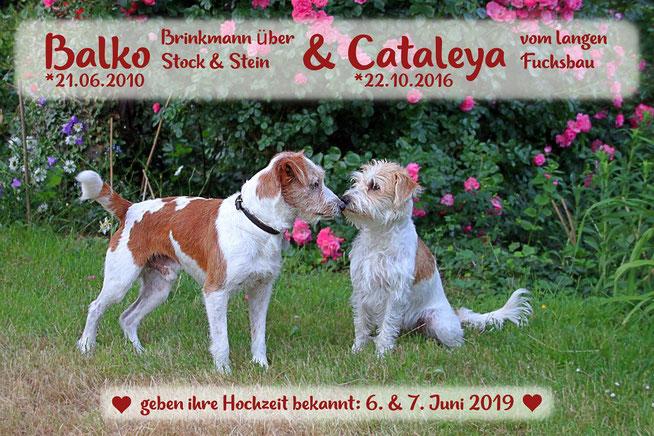 Hochtzeitsanzeige von Cataleya & Balko