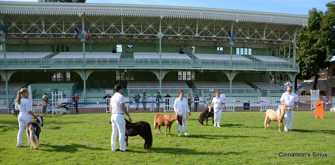 Stade Equestre du Sichon à Vichy au petit matin à 9 heures - Classe Femelle 1 an