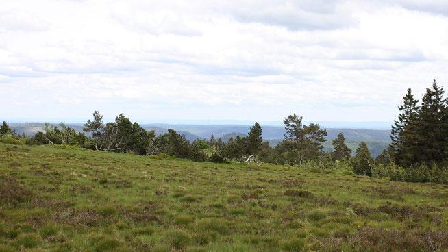 Auf dem Schliffkopf (1053 m. ü . NHN)