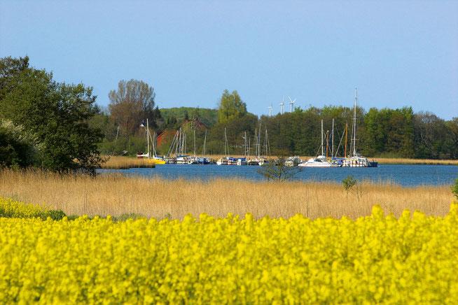 Der Yachthafen von Lindaunis, direkt vor der Haustür
