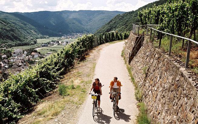 Ideal zum Radeln – der Herbst: Der ADFC Rheinland-Pfalz empfiehlt vor allem die pfälzische Haardt und idyllische Wege entlang kleiner Flüsschen © ADFC/Markus Gloger