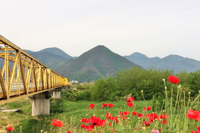さかき千曲川バラ公園からみた岩井堂山