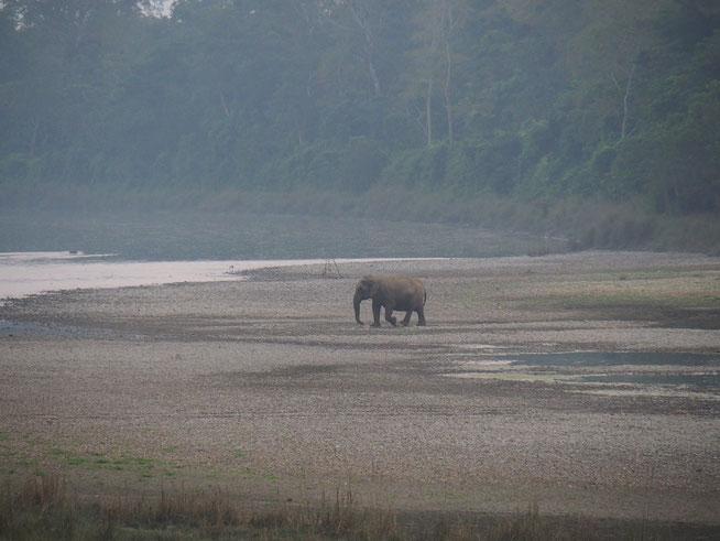 Elefant in Chitwan