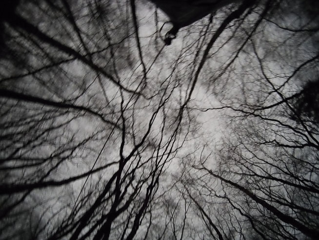 Wald Horror