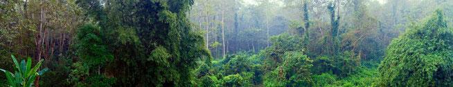 Chitwan Dschungel Nepal Panorama