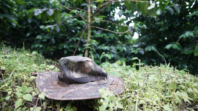 Fundstück auf der thailändischen Kaffeeplantage