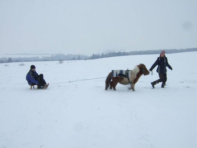 Wandern Schnee Pony Schlitten Winter Lasten-Tier