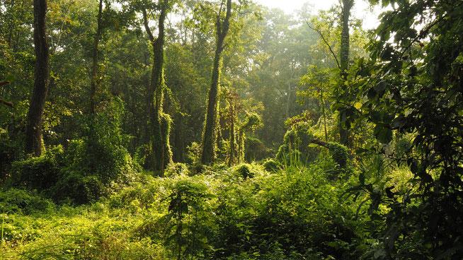 Chitwan Dschungel