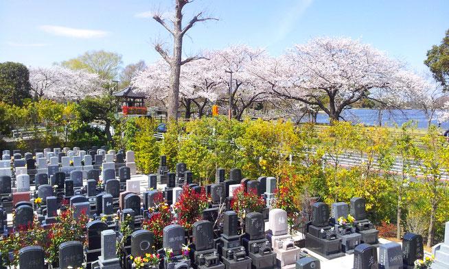水元公園「ともしびの郷」から都立・水元公園望む。 4月には土手の桜が見事です。