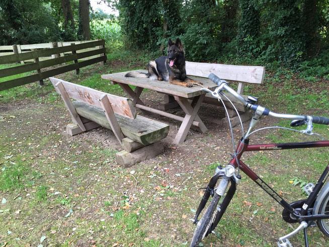 Fietsen tot en met augustus 2015 met Ixy en de vorige fiets, een Batavus Belcanto
