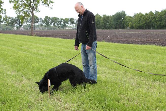 Henk Atema met Riske tijdens een training bij de kringgroep DWO in Hardenberg mei 2015