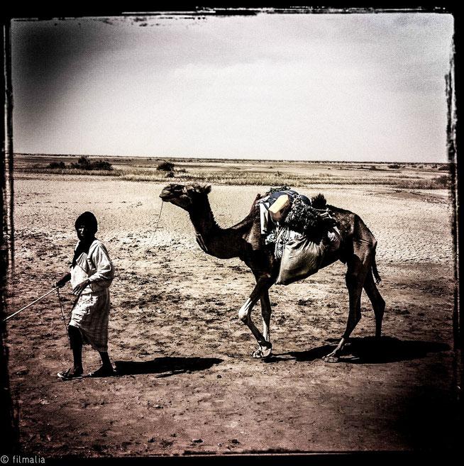 Pastor de camellos. Parque nacional Diawling. Mauritania.