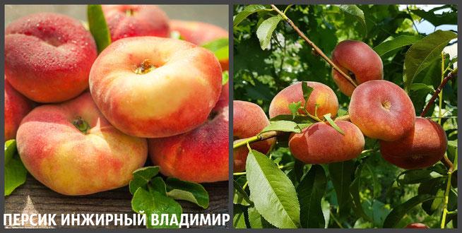 саженцы персика в Клину