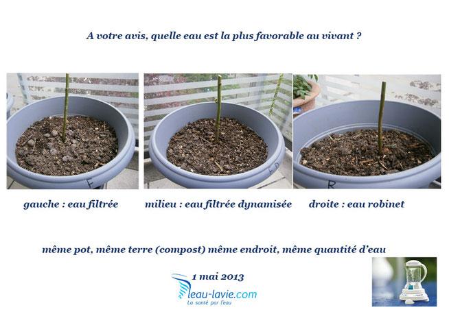 test eau dynamisée sur plantes
