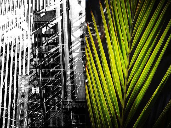 Mathieu Guillochon photographe, USA, Espagne, architecture, plante, couleur, noir et blanc, Manhattan, Andalousie, Trump Tower, Cabo de Gata, reflet, transparence, tubes, reflets, feuilles, nervures