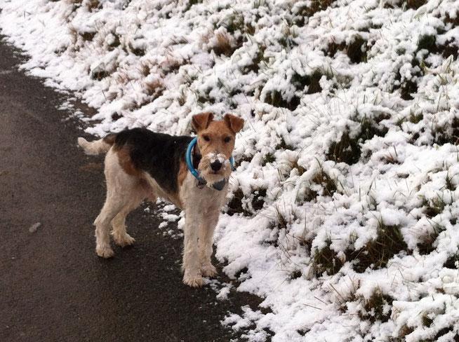 Dusty mit 4 Jahren bei einer Schneewanderung