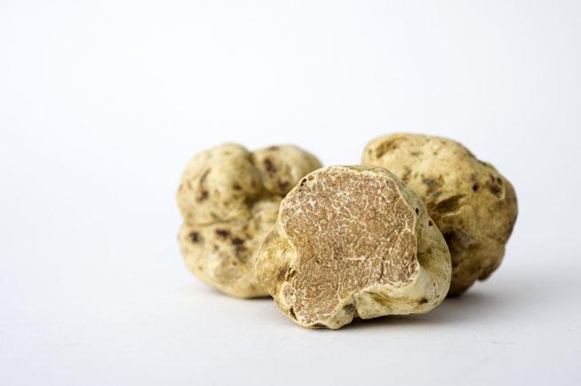 Photo de la précieuse truffe blanche (Tuber magnatum Pico)
