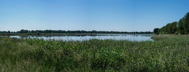 Bild: Naturschutzgebiet Friedrichsmoor