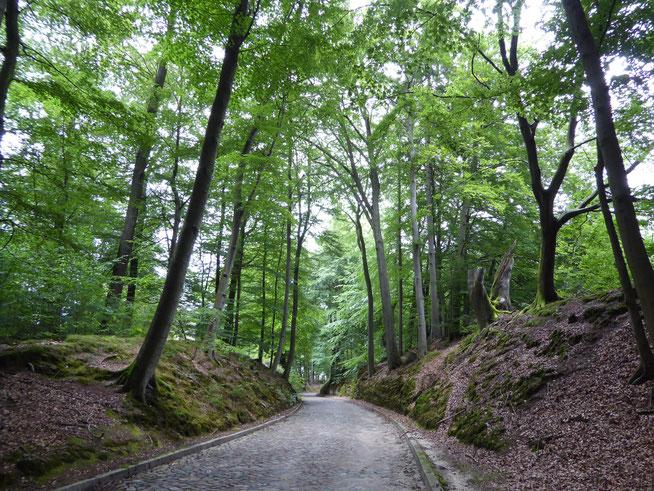 Bild: Höhlenweg im Sachsenwald