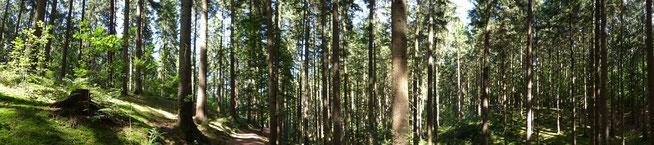 Bild: Panoramaaufnahme des Waldes im Sachsenwald