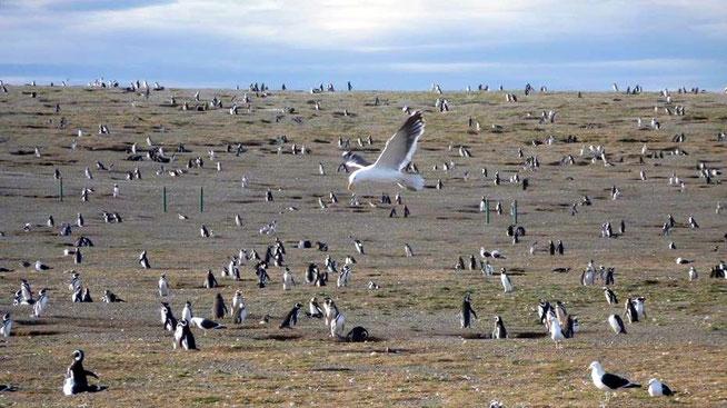 Bild: Pinguine und Möwe