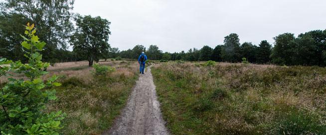 Bild: Naturschutzgebiet Wittmoor