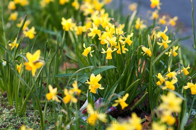 De eerste bloemetjes staan weer in bloei langs de vele wegen met grasperkjes is dit een bekend gezicht. Helaas hoort daar ook het zwervuil bij wat in schril contrast staat tot de natuur.