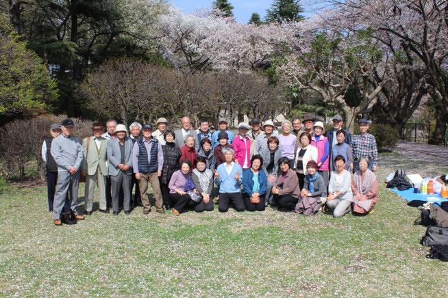 保土ケ谷公園花見会(2015/4/6)