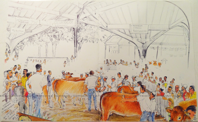 Dessin Le Festival de l'élevage mis en couleurs - Copyright Catherine Dubreuil